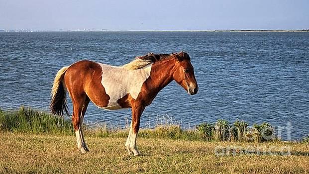 Paulette Thomas - Assategue Pony