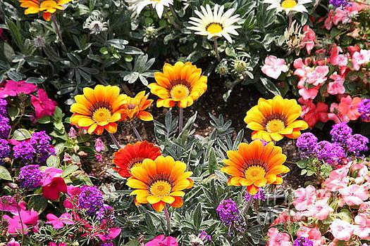 Chuck Kuhn - Assorted Flowers II