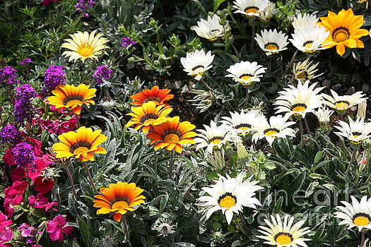 Chuck Kuhn - Assorted Flowers white, golds