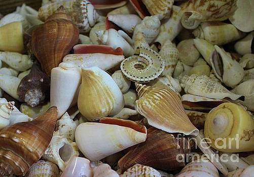 Paulette Thomas - Assorted Sea Shells