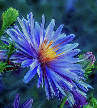 Aster blue painterly #h1 by Leif Sohlman