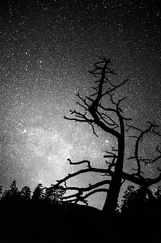 James BO Insogna - Astrophotography Night Black and White Portrait View