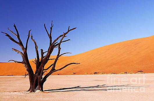 At Dead Vlei, Namibia by Wibke W