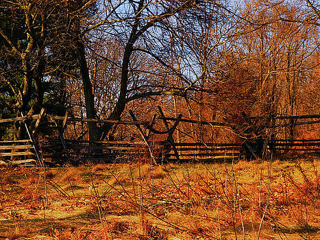 AT in Maryland Fence by Raymond Salani III