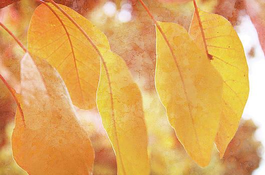 At Leaf Fall by Margaret Hormann Bfa