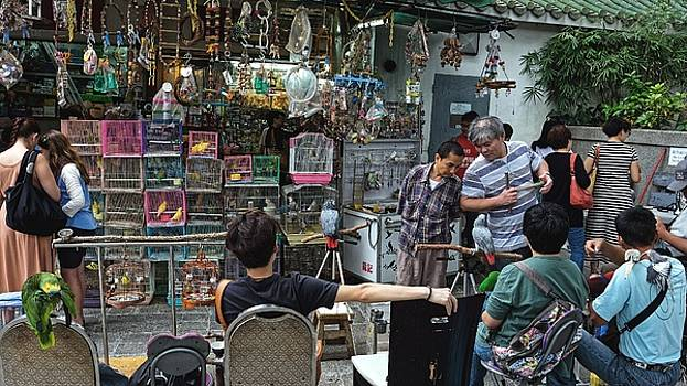 At the bird market, Kowloon 2013 by Chris Honeyman