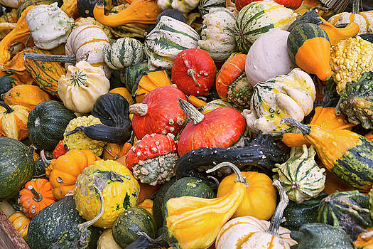Peggy Collins - At the Farmers Market - Squash and Pumpkins