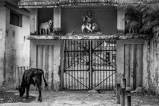 At the Goshala Gate by Paul Donohoe