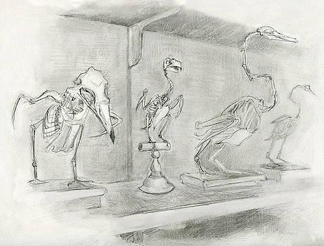 Bird Skeletons by Abby McBride