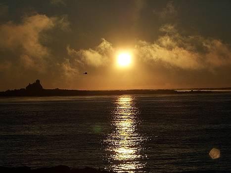Atlantic Awakening by Susan Kneeland
