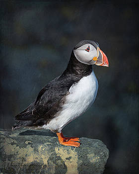 Atlantic Puffin - 0763,ST by Wally Hampton