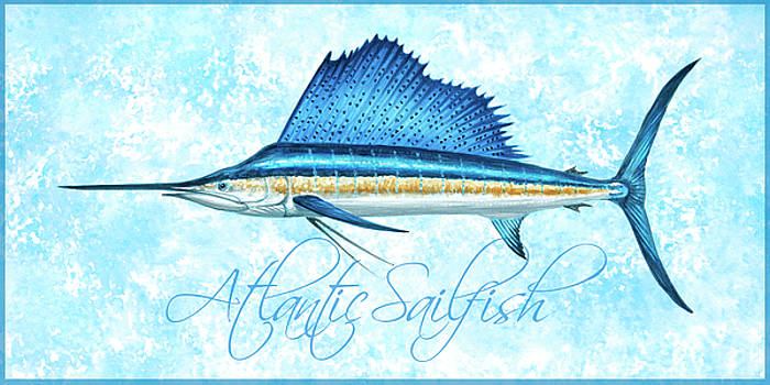 Atlantic Sailfish Watercolor with Blue Border by Guy Crittenden