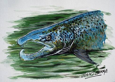 Atlantic salmon male by Juan Jose Serra