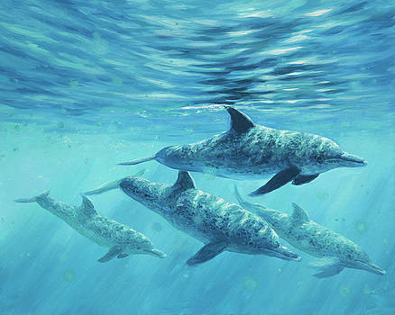Atlantic Spotted Dolphin by Guy Crittenden