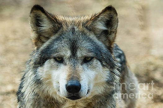 Attentive by Ronald Hoehn