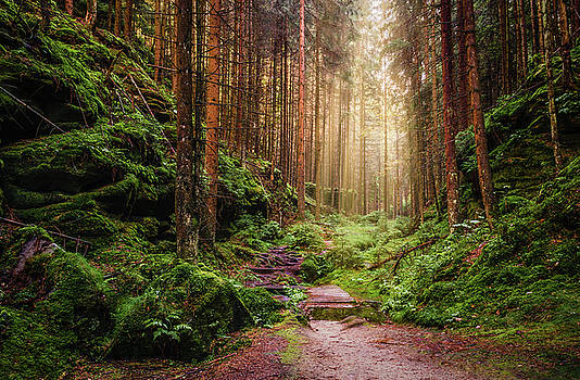 Attractive Pathway in Saxon Switzerland by Dmytro Korol