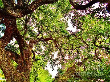 Auction Oak, Kyle, Texas by Chuck Taylor