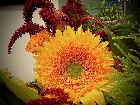 August Sun by Elizabeth Tillar