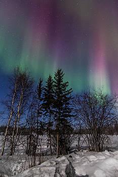 Aurora Curtains by Valerie Pond
