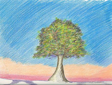 Aurora Tree by M Hakima  M D
