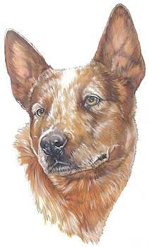 Barbara Keith - Aussie Cattle Dog
