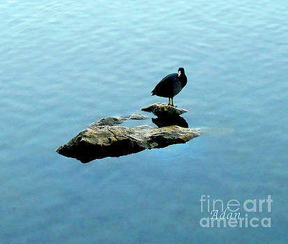 Felipe Adan Lerma - Austin Texas - Lady Bird Lake - Mid November - One - Detail