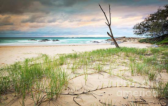 Tim Hester - Australia Beach Sunrise
