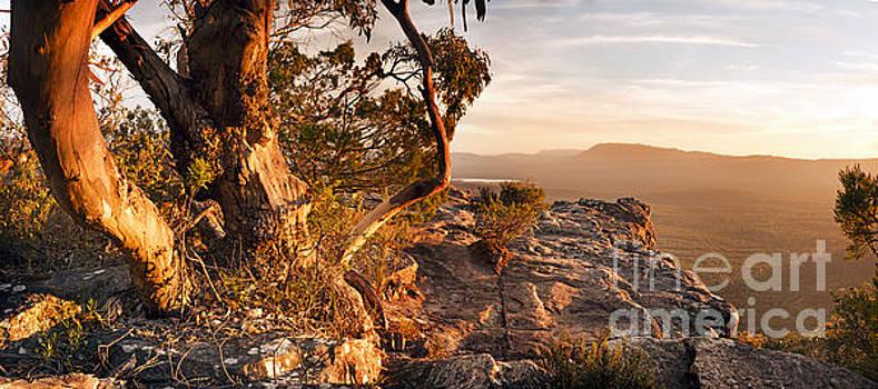 Tim Hester - Australian Bush Landscape Panorama