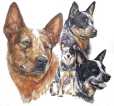 Barbara Keith - Australian Cattle Dog