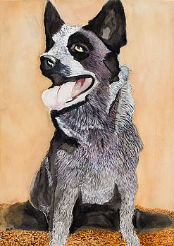 Australian Cattle Dog by Marcella Morse