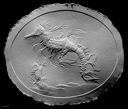 Australian Reef Sea Horse by Suhas Tavkar