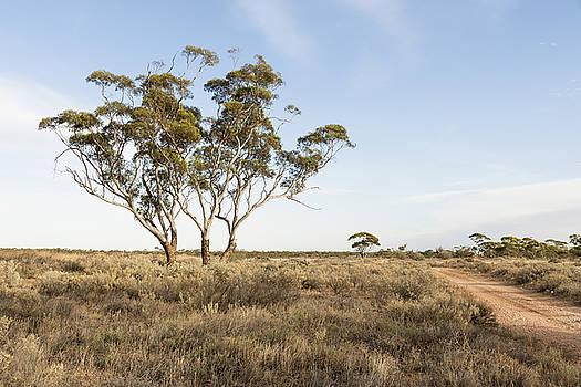Australian Rural Landscape by Vicki Vale