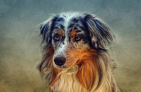 Australian Shepherd by Claudia Moeckel