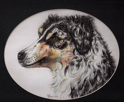 Australian Shepherd Della Mae by Chris Bajon Jones