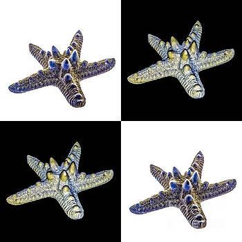 Australian Starfish Composite Design by John Gaffen