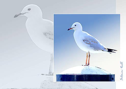 Holly Kempe - Australian Wildlife - Silver Gull