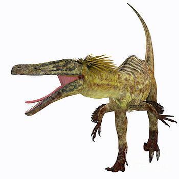 Corey Ford - Austroraptor Dinosaur on White