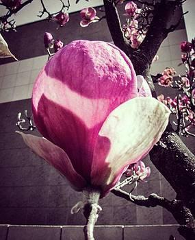 #autohash #slovakia #flower #rose by Michal Dunaj