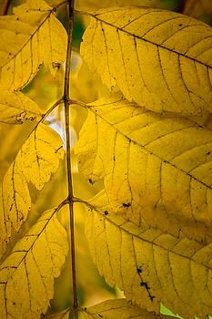 James Woody - Autumn Brilliance