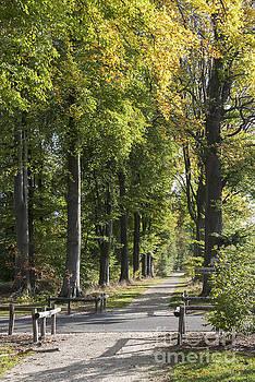 Compuinfoto  - autum forest