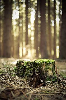 Autum Green by Gerd Doerfler