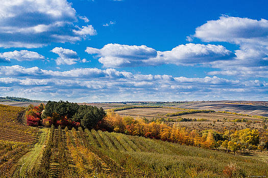 Autum wineyards by Dumitru Carpov