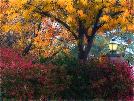 Autumn 3 by Jeff Breiman