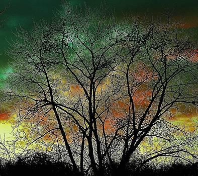 Autumn 4 by Todd Sherlock