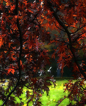 Autumn 5 by Jeff Breiman