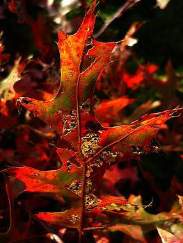 Autumn 6 by Jeff Breiman