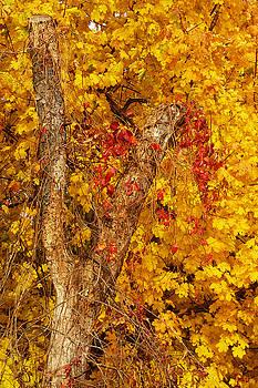 Autumn 8 by Jeff Breiman