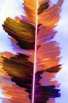 Autumn Abstract by Carolyn Stagger Cokley