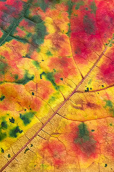 Autumn Abstract by Crystal Hoeveler