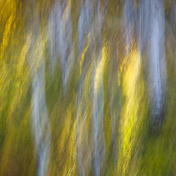 James Woody - Autumn Abstract